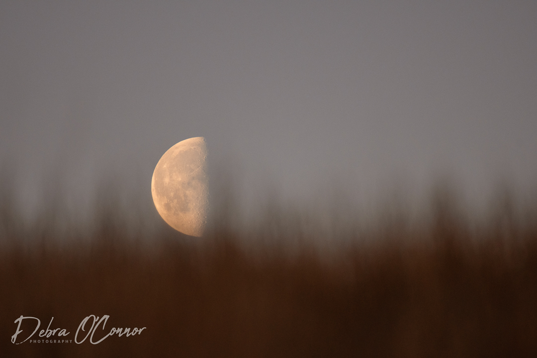 Award Winning Lancashire Wildlife Photographer - moon